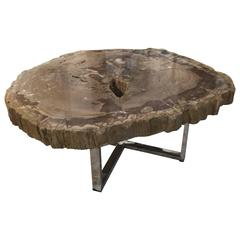 Very Nice Large Modern Petrified Wood Coffee Table with Steel Base