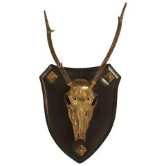 French Polished Brass Stag Skull