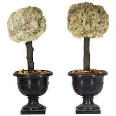 Pair of Preserved Moss Topiary Trees in Stylish Urns