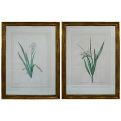 Pair of Botanical Stipple Engravings by P. J. Redoute