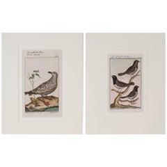Beautiful Bird Scenes Captured on Paper style of Audubon Bird Engravings
