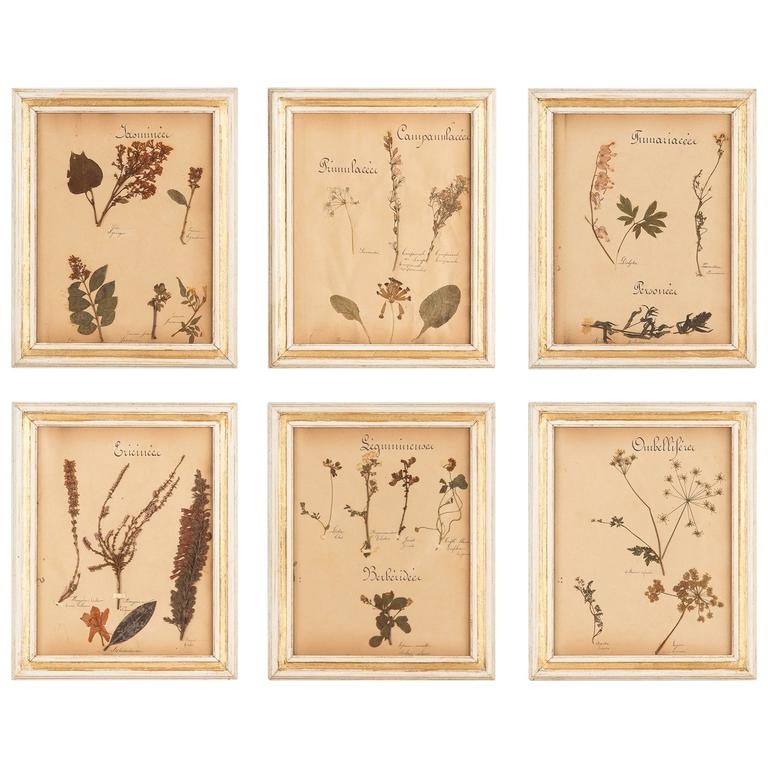 Set of Six French Frames with Pressed Botanicals, circa 1930s For Sale