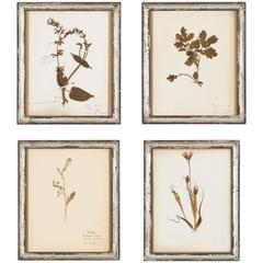 Set of Four French Frames with Pressed Botanicals, Early 1900s