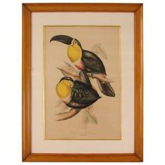 Colored Lithograph of Two Toucans by Gould
