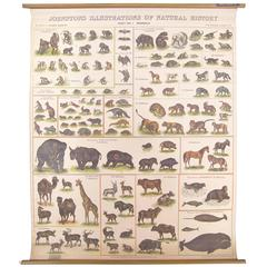 Antique Scientific Chart - Illustrations of Natural History