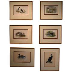 Collection of Antique Hand Colored Bird Prints
