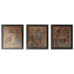 Circle of Samuel Dixon; 18th Century Trio of Ornithological Watercolour Studie