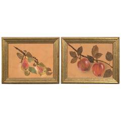 Pair of Framed Fruit Paintings, circa 1930s