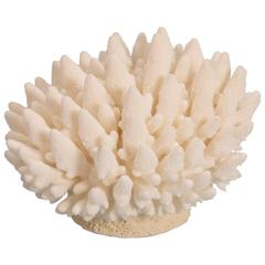 Organic Finger Coral Sculpture