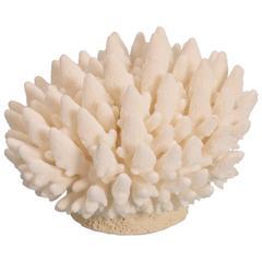 Organic Finger Coral Sculpture