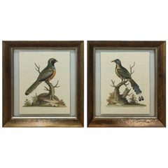 Pair of Ornithological Prints
