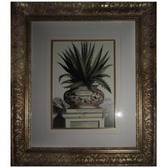 Aloe Botanical Framed Prints, Heavy Gold Frame with Gold Filet