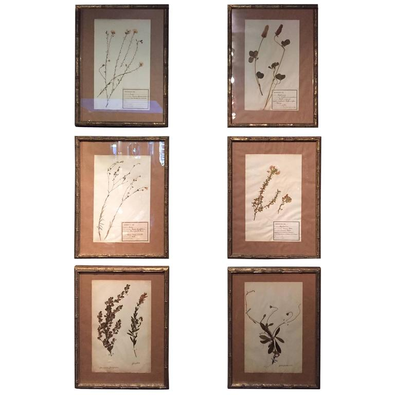 "Late 19th Century Framed and Pressed French Herbier ""Pressed Plant"" Specimens 1"