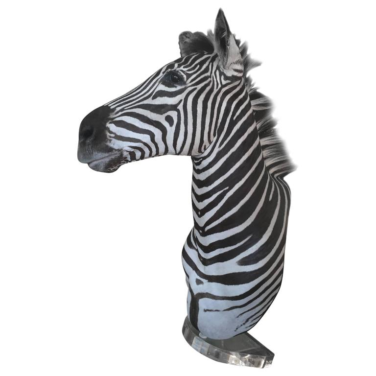 Zebra Mount Taxidermy
