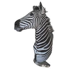 Zebra Mount Taxidermy