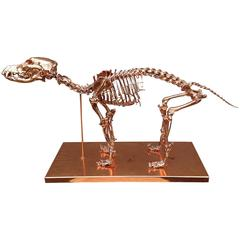 Copper-Plated Dog Skeleton