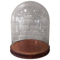 Glass Display Dome Cloche with Walnut Base