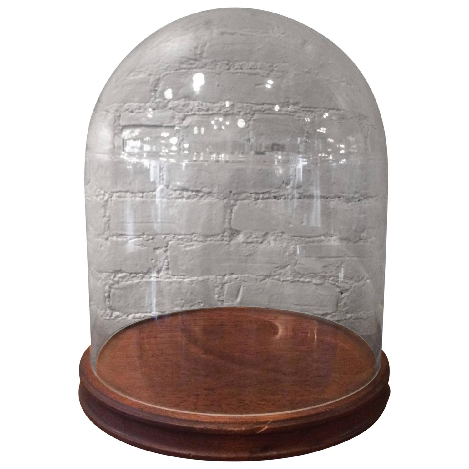 Glass Display Dome Cloche With Walnut Base For Sale At 1stdibs. Full resolution  pic, nominally Width 1500 Height 1500 pixels, pic with #6A3E32.