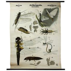 Vintage 19th Century Wall Chart by Rudolf Leuckart, Orthoptera, Insects, 1879