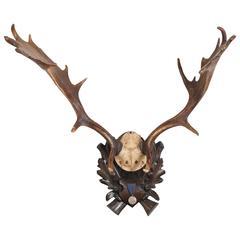 Habsburg Fallow Deer Trophy from Eckartsau Castle with Original Medal