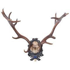 """19th Century Habsburg Fallow Deer """"E"""" Trophy from Eckartsau Castle"""