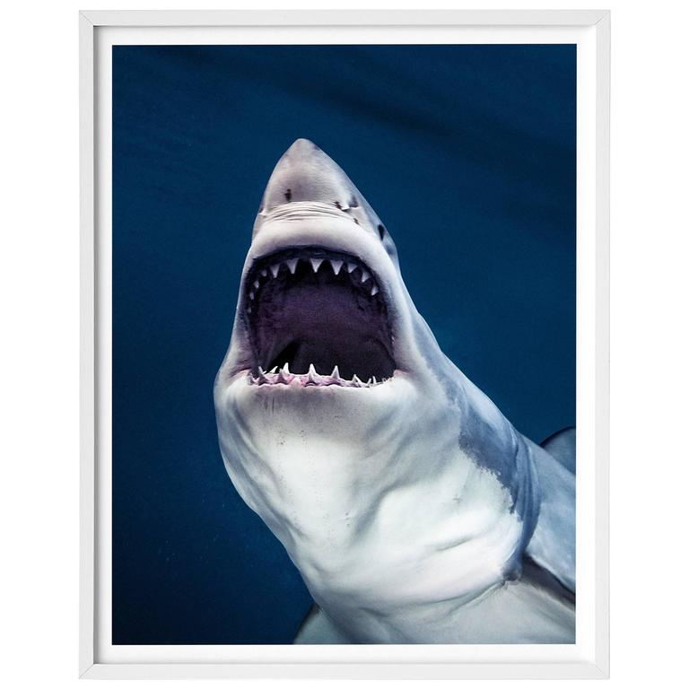 Michael Muller, Sharks, Art Edition No 1-100 'Tear You Apart' For Sale