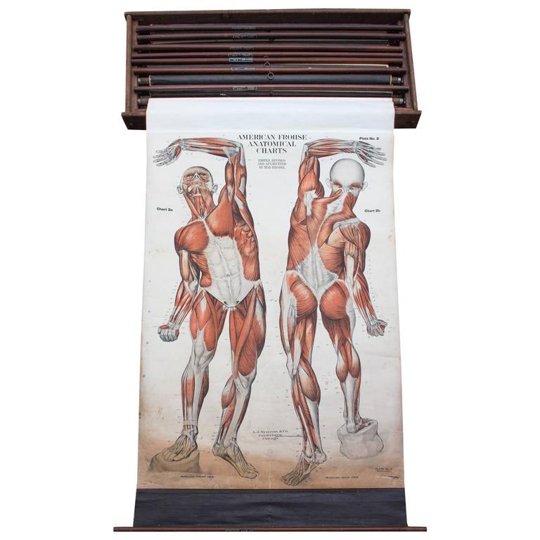 American Frohse Nine Anatomical Wall Charts Nystrom Chicago 1918