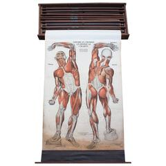 American Frohse, Nine Anatomical Wall Charts, Nystrom, Chicago, 1918