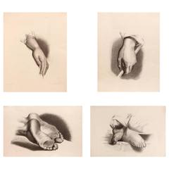 19th Century Classical Anatomical Drawings