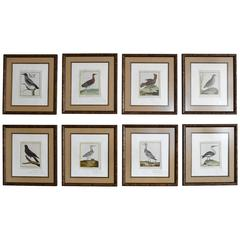 Set of Eight Hand-Colored Bird Engravings by Francois Nicolas Martinet