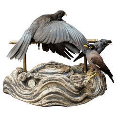 Duo of Rare Vasa Parrots. Fine Taxidermy by Sinke & Van Tongeren