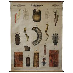 Rare Antique 19th Century Wall Chart by Rudolf Leuckart, Beetles