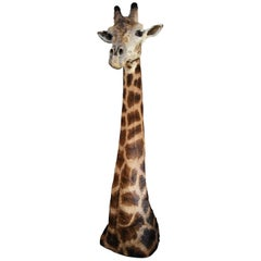 Rare Freestanding 20th Century African Taxidermy Giraffe Head and Neck