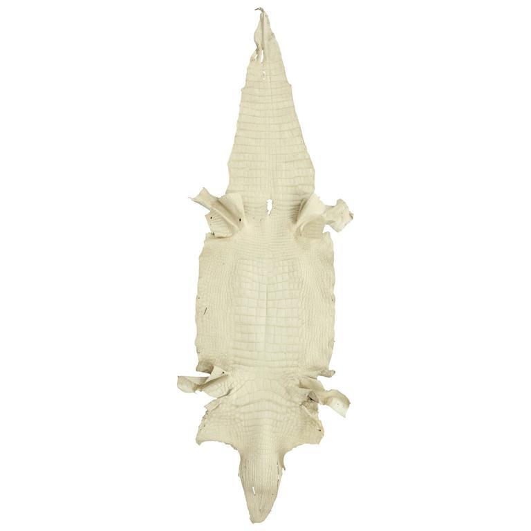 Crocodile Skin At 1stdibs