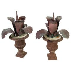 Pair of Zinc Agave's in Bronze Urns