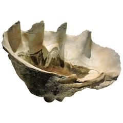 Antique Giant Clam Shell