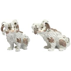 Pair of Dresden Porcelain Bolognese Dogs