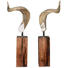 Aries Horns Set of Two on Noble Wood Base