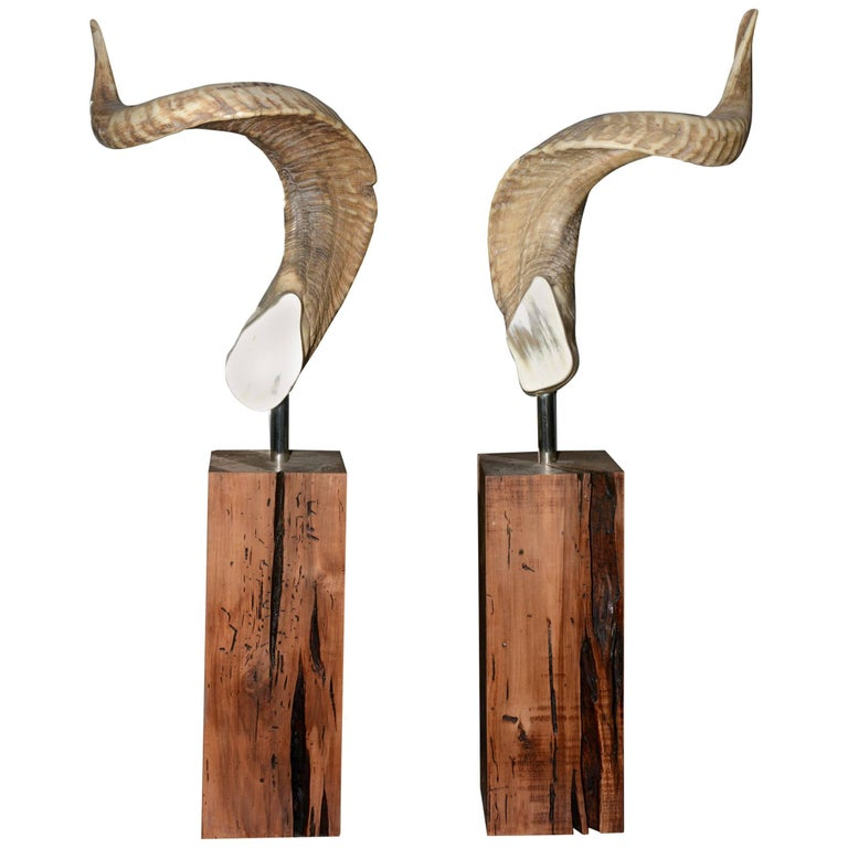 Aries Horns Set of Two on Noble Wood Base For Sale