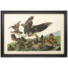 Virginian Partridge, Plate 76, Amsterdam Audubon Edition