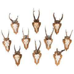 Set of Ten Vintage Black Forest Deer Antler Mounts