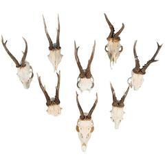 Set of Eight Vintage Black Forest Deer Antlers
