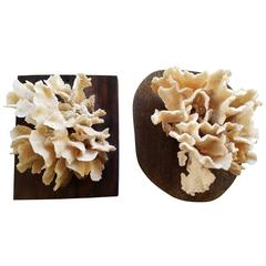 Pair of Cream White Coral Specimens Mounted on Wood