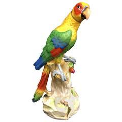 Large Meissen Style Porcelain Parrot