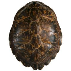 19th Century Tortoise Shell Large