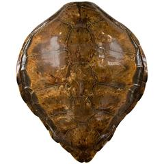 Large 19th Century Tortoise Shell