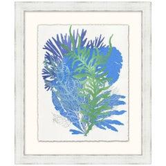 Graphic Sea Life Prints
