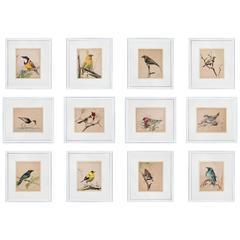 Set of 12, 1920s Ornithological Watercolours of Australian Interest