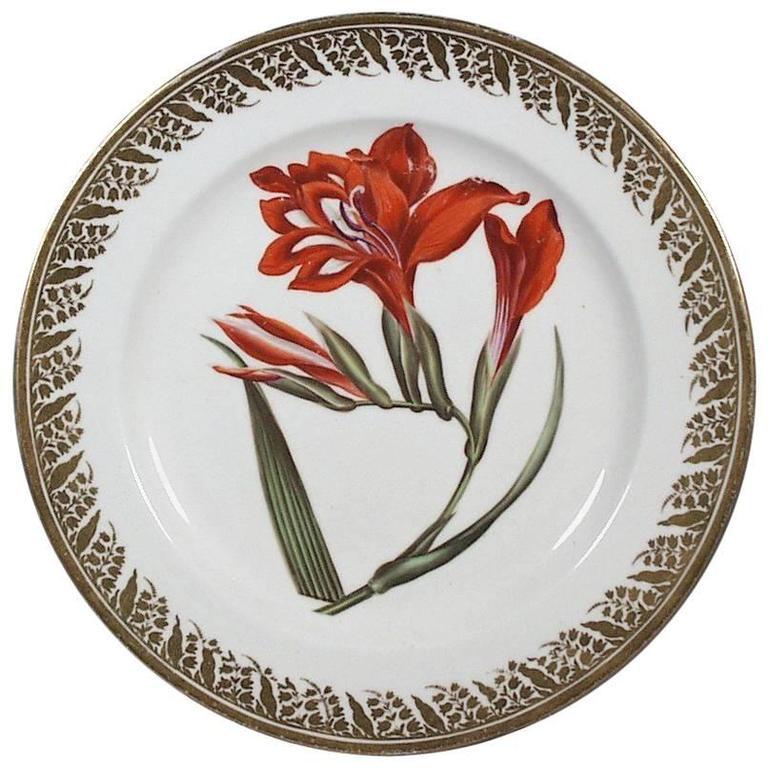 Antique Derby Porcelain Plate Decorated with a Botanical Specimen For Sale