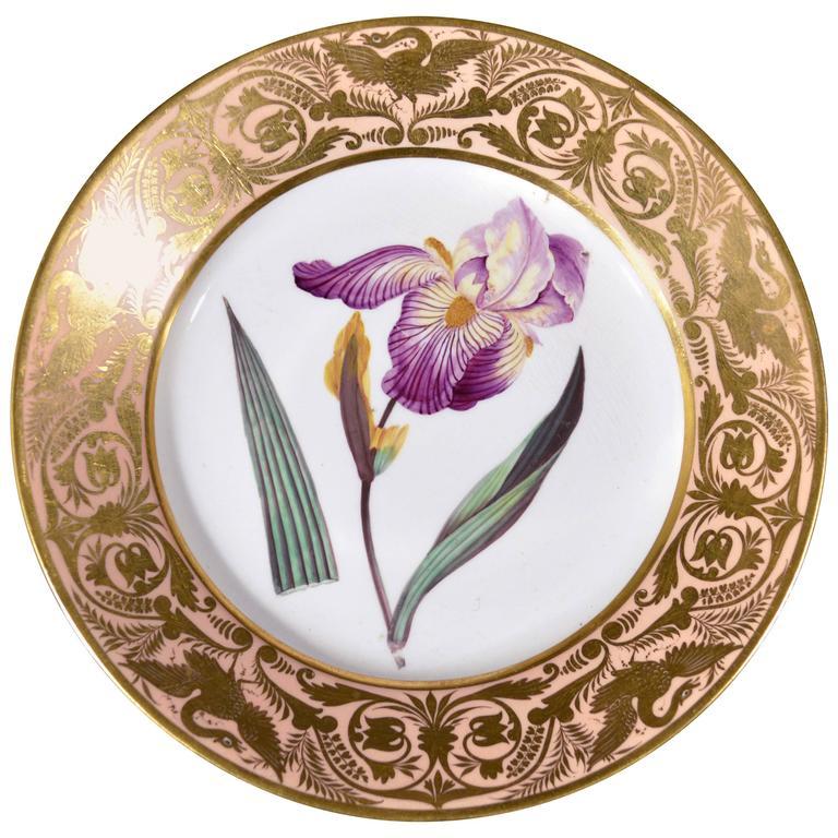 Antique Derby Porcelain Salmon Plate, Elder Scented Iris, after William Curtis For Sale